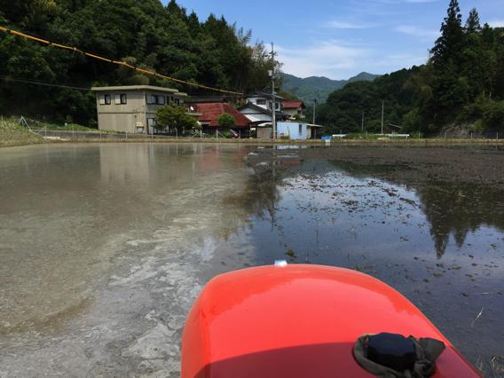 05_shirokaki.jpg