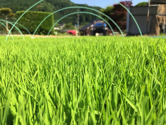田んぼシーズン真っ盛り