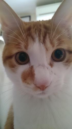 僕と猫と『ゴリラウォッシュ』のスプリング・クリーニング。
