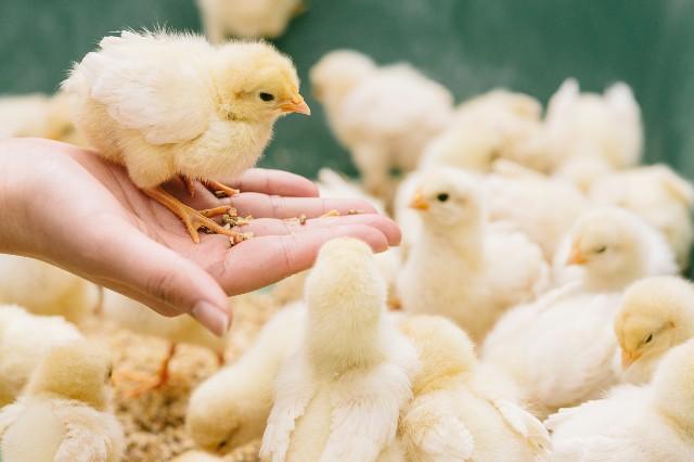 Vol.157 ゆで卵から雛は生まれない